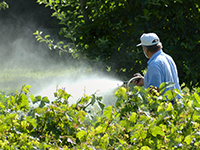 pesticide-2